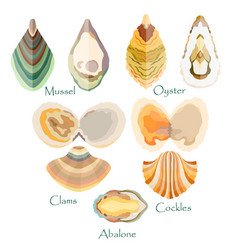 Set with edible mollusks made in flat style vector