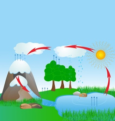water cycle vector image vector image