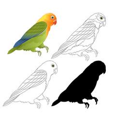 Agapornis lovebird parrot tropical bird natural vector