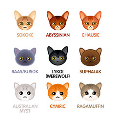 cute cat icons set vi vector image