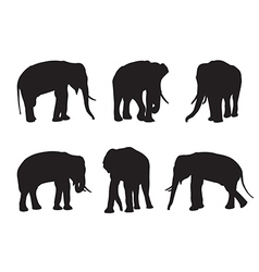 Elephant Set Silhouettes on the white background vector