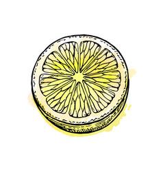 sketch of lemon vector image