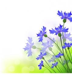 cornflowers vector image vector image