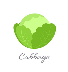 cabbage icon with title vector image