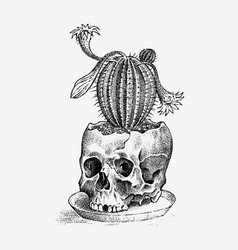 human skull with cactus retro old school sketch vector image