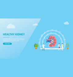 Kidneys or kidney healthcare concept for website vector