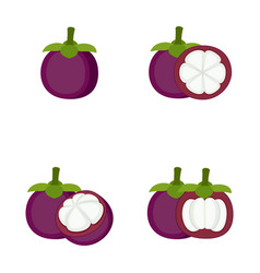 mangosteen whole fruit half slice vector image