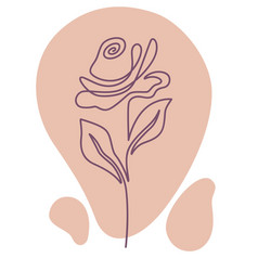 Rose flower in blossom flora with tender petals vector