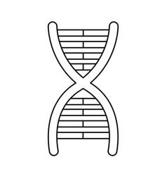dna molecule chromosome biology genetic line vector image