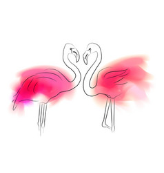 Outline pair flamingo with pink color stains vector