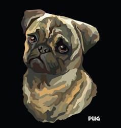Pug colorful portrait vector