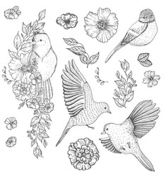 set of of birds and flowers vector image