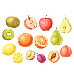 set ripe fruits tropical vegetarian food vector image