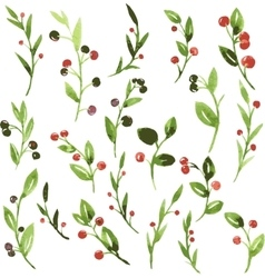 Watercolor green branches with berries vector