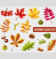 Autumn Leaves Transparent Set vector image