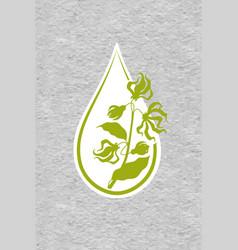 a drop of ylang ylang flower essential oil logo vector image