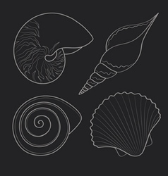Graphic sea shells vector