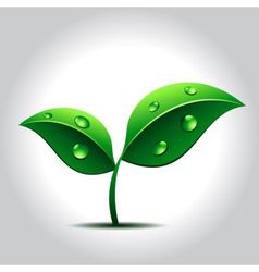 green plant with water drops on leaves vector image