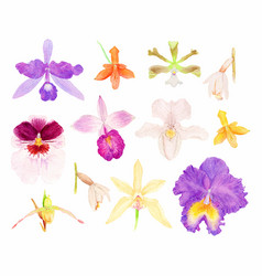 Orchid watercolor set vector