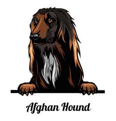 Peeking dog - afghan hound - dog breed color vector