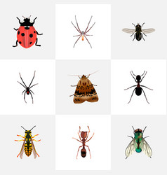 Set of bug realistic symbols with wasp fly sting vector