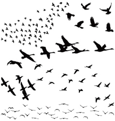 Silhouette a flock of birds vector image