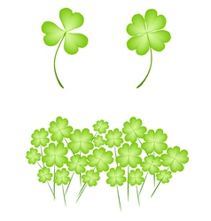 Four Leaf Clovers on White Background vector image