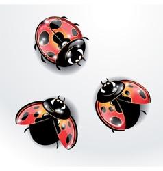 Three red ladybugs vector image
