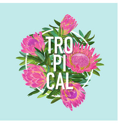 Tropical floral summer design protea flowers vector