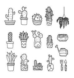 set of fancy cactus plants vector image