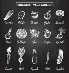 farm vegetables sketches set organic vector image