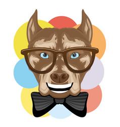 Funny pit bull terrier dog in glasses vector