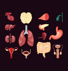 organs human anatomy set system internal vector image