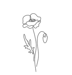 poppy flower in simple minimal vector image