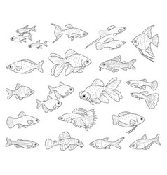 popular aquarium fishes vector image