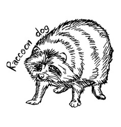 Raccoon dog vector
