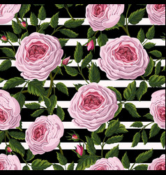 Seamless pattern with pink english roses vector