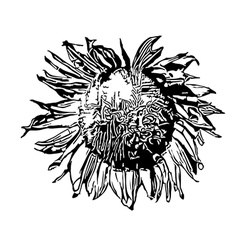 Sunflower silhouette vector image