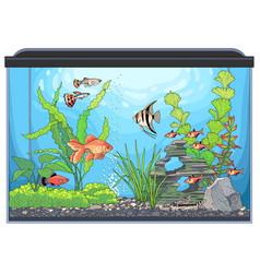 aquarium landscape vector image