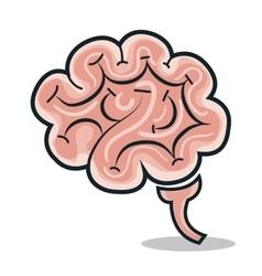 Brain human smart icon vector