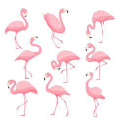 Pink flamingo cartoon vector
