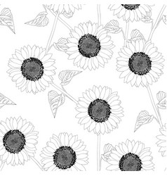 sunflower outline on white background vector image