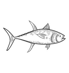 Tuna fish sketch vector