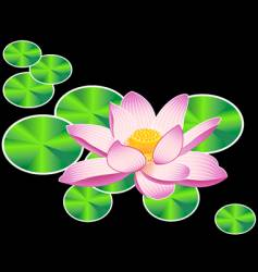 water lily or lotus flower vector image