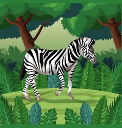 zebra in the jungle vector image