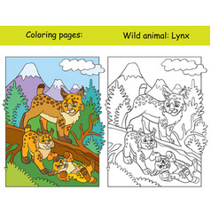 Coloring book page and color template lynx vector