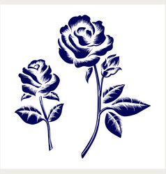 Engraving roses on grey background vector