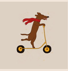 Funny dachshund dog riding scooter vector
