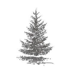 Hand-drawn tree fir realistic image in shades of vector