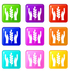 Hands and ear of wheat set 9 vector